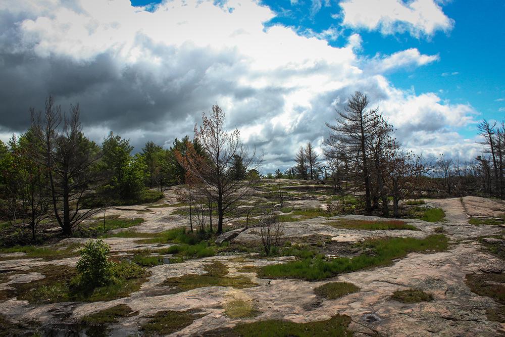 Wandern in Bracebridge, Ontario