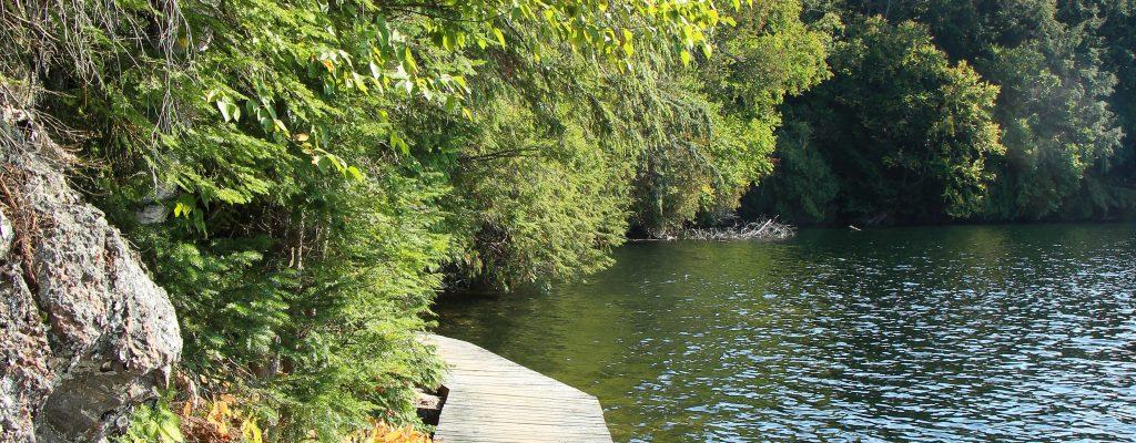 Limberlost_Ontario_Sep_2017 (14 of 21)