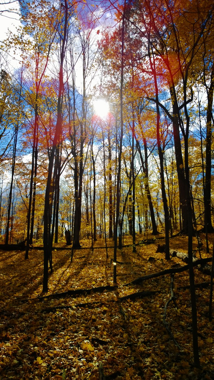 Sherwood Park im Herbst