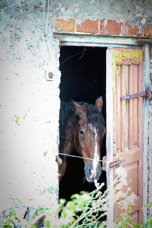 Horse in Polish Village